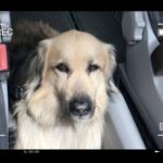 accesorios perro_Miko