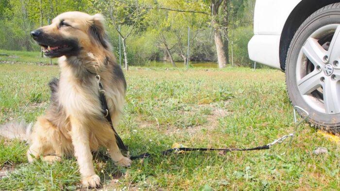 accesorios perro_estaca